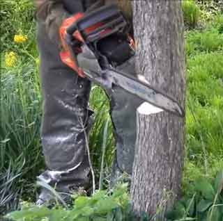 Small Tree Cut with Chainsaw